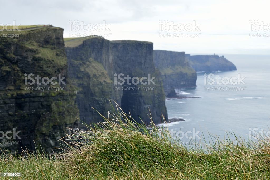 Tuff of Grass at Cliffs of Moher stock photo