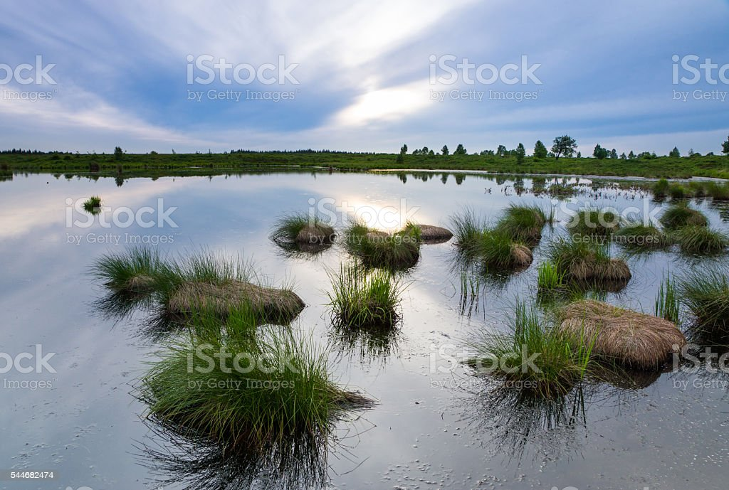 Tuft of grass growing in a pond in belgium. stock photo