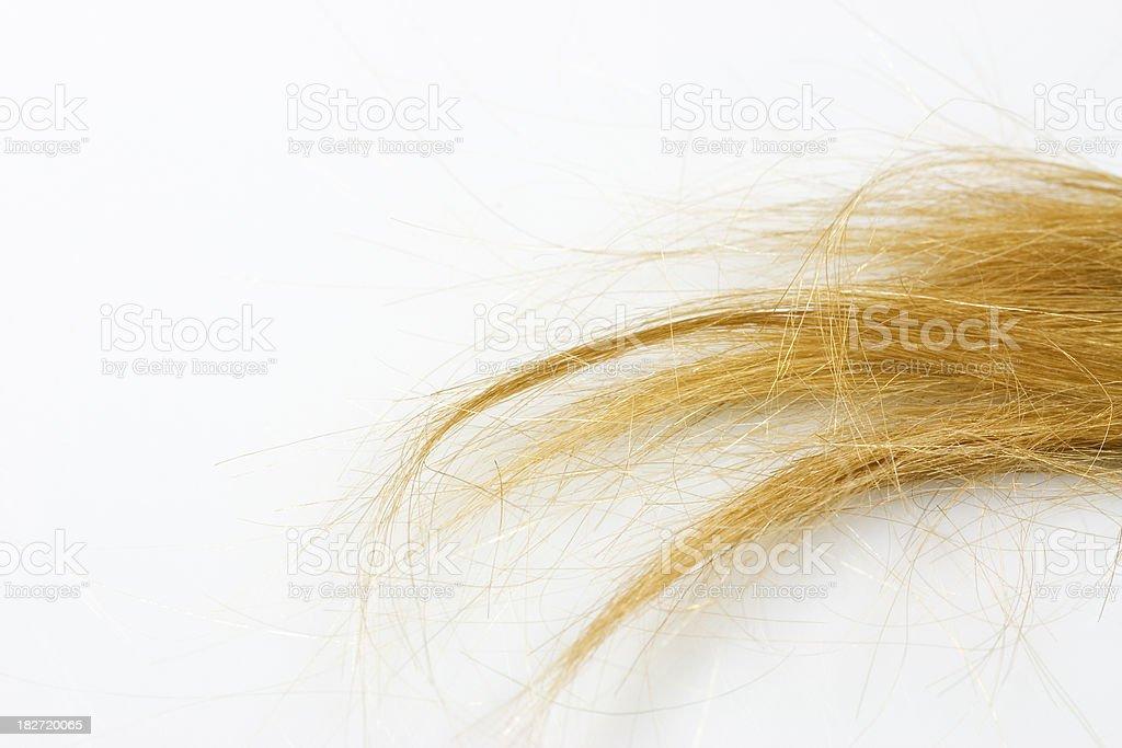 tuft of hair stock photo