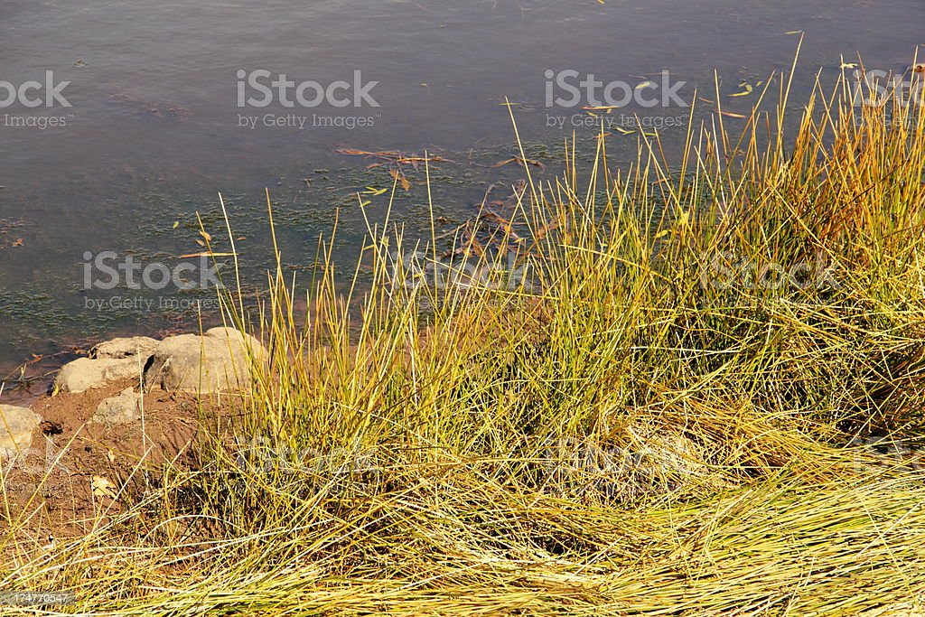 Tufts Of Grass Along Pond stock photo