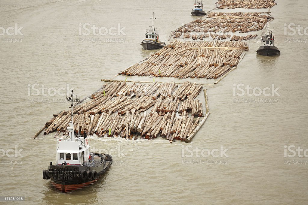 Tugboats transporting cut logs. stock photo