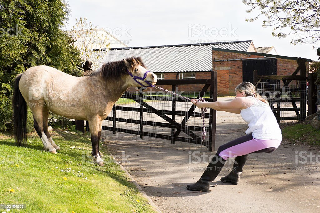 Tug-of-war! young girl fighting losing battle with pony. royalty-free stock photo