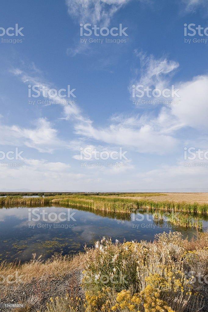 Tule Lake Marshland stock photo