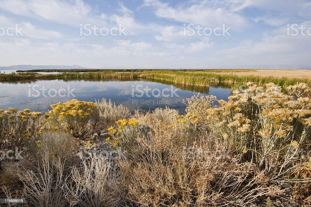 Tule Lake Marshland royalty-free stock photo