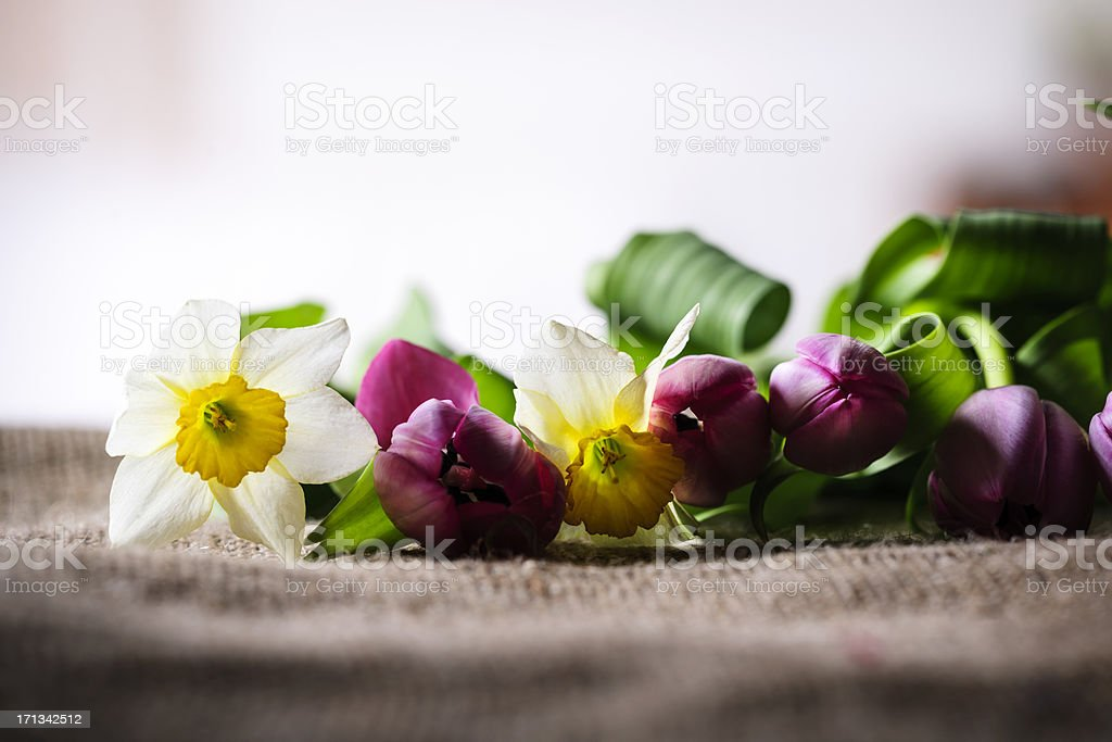 tulip and daffodil royalty-free stock photo