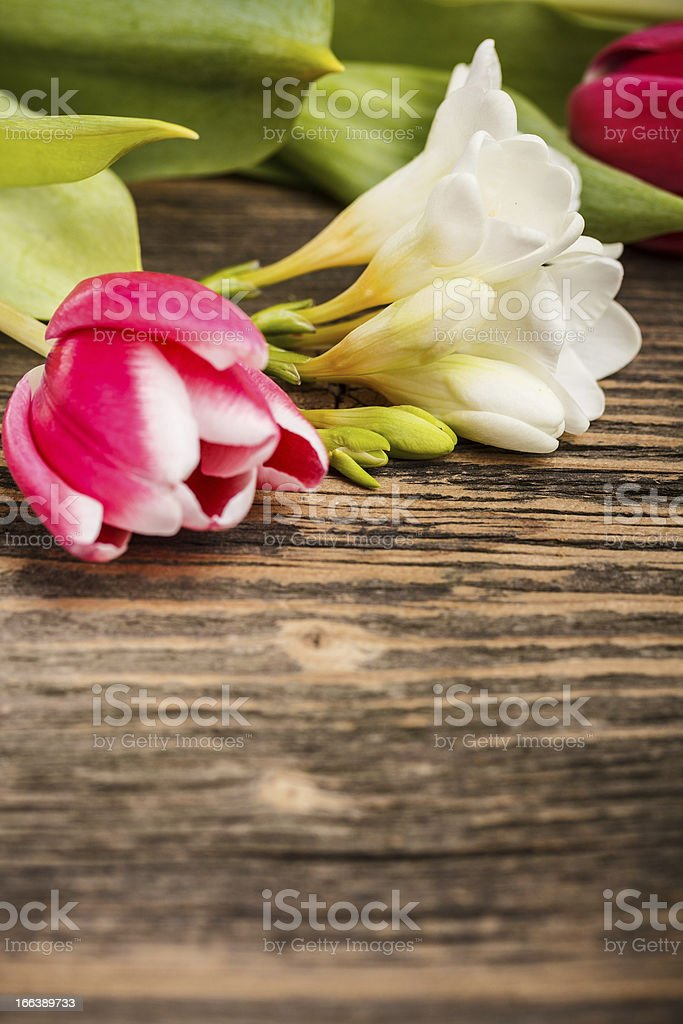 Tulip and freesia royalty-free stock photo