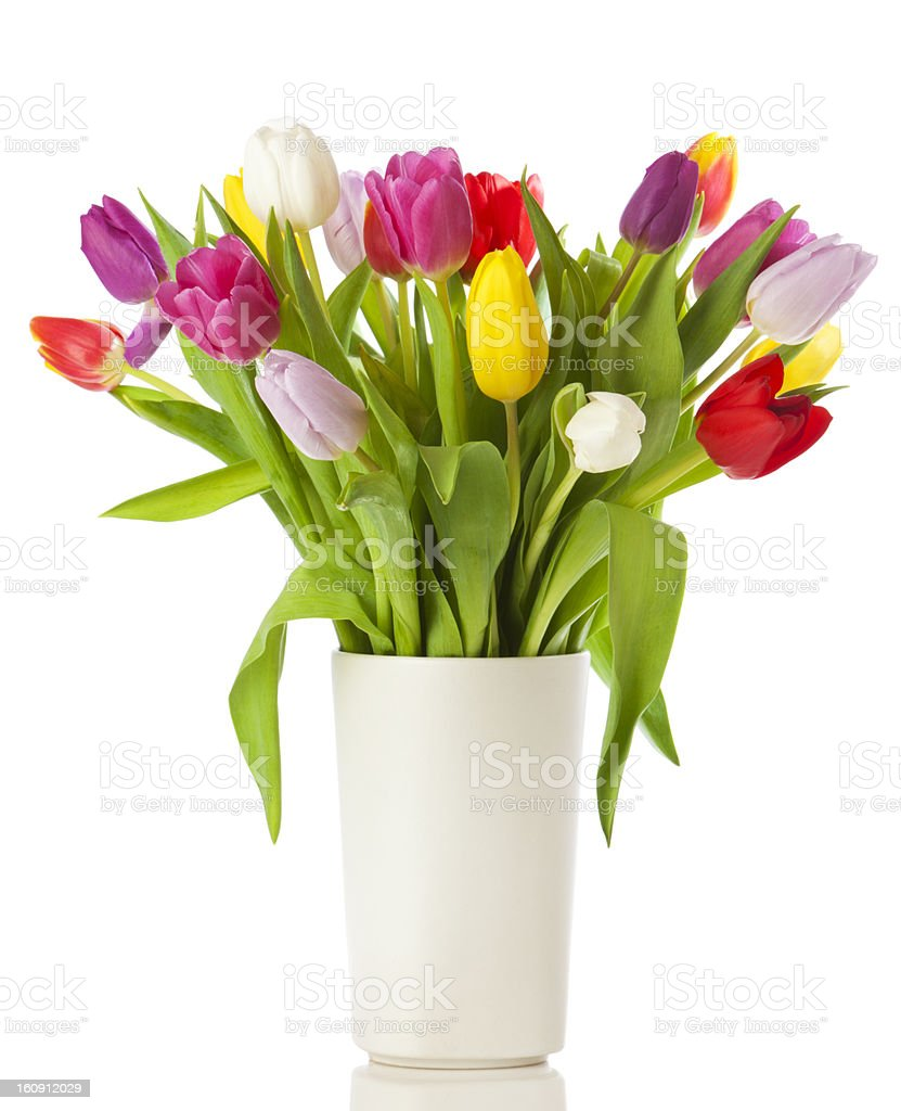 Tulip bouquet in a vase isolated stock photo