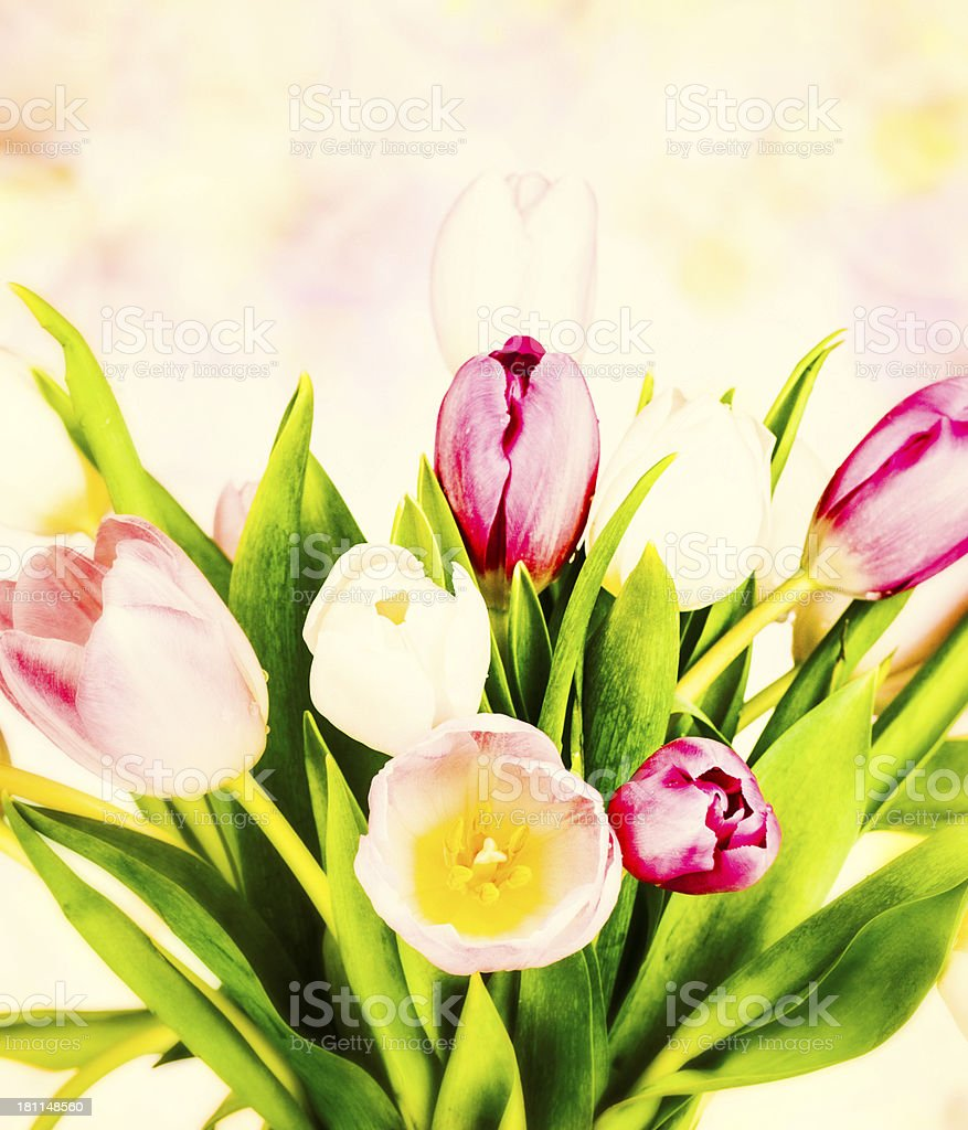 Tulip Bouquet Vintage Style royalty-free stock photo