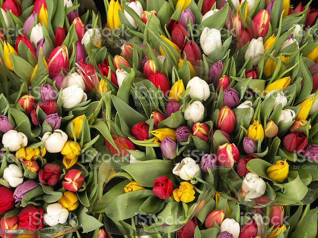Tulip bouquets royalty-free stock photo
