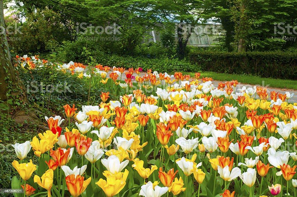 Tulip carpet stock photo