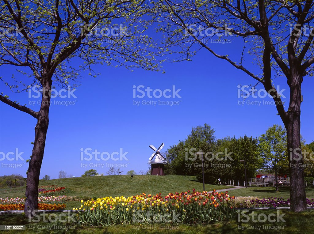 Tulip Festival I stock photo