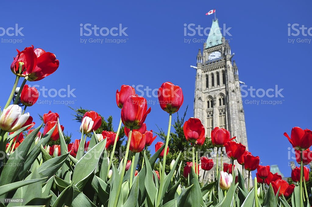 Tulip Festival in Ottawa stock photo