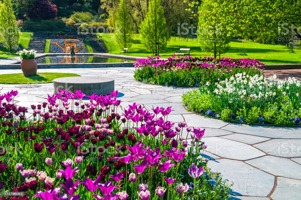 Tulip Flowerbeds and pond royalty-free stock photo