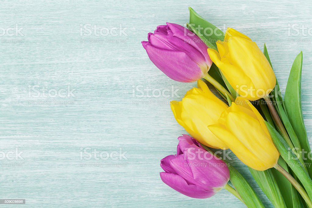 Tulip flowers for International Womens day, Birthday or Mothers day stock photo