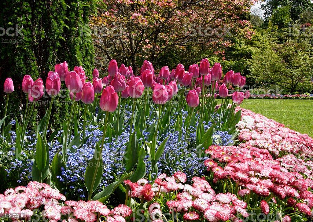 Tulip garden stock photo