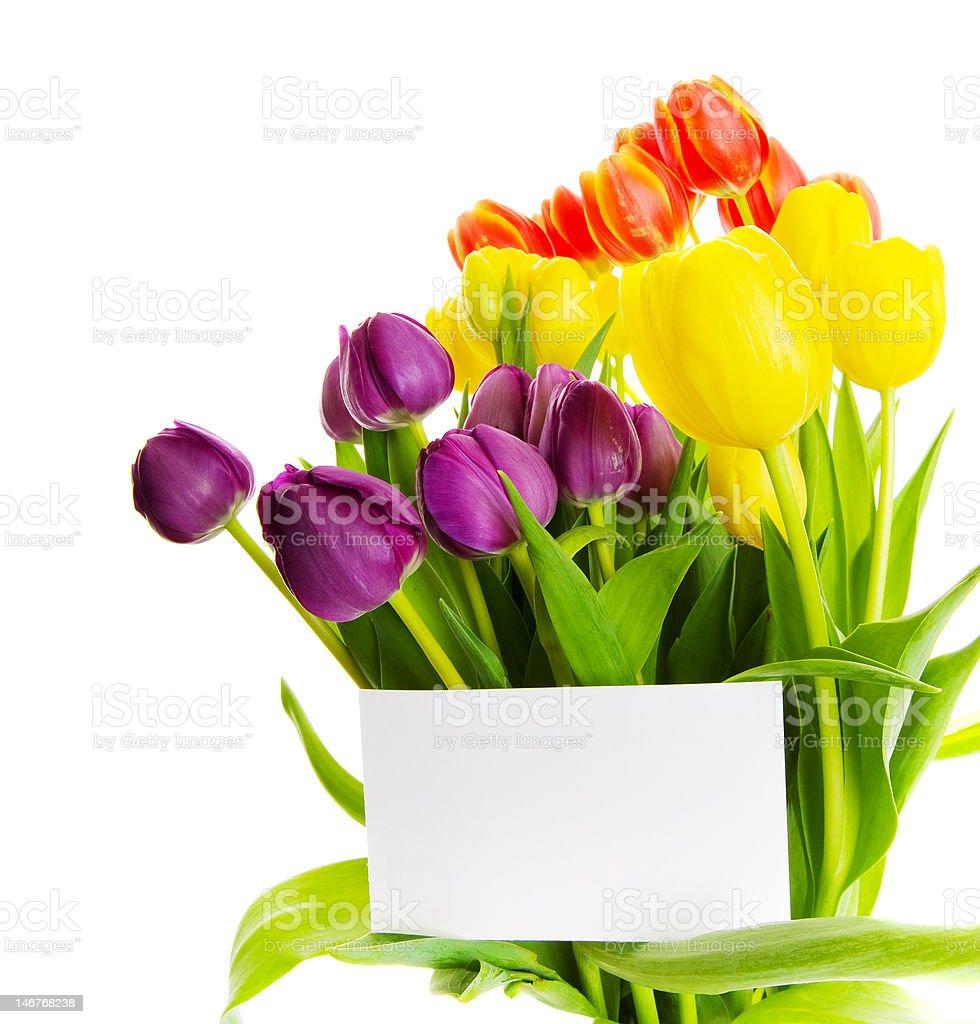 Tulip gift royalty-free stock photo