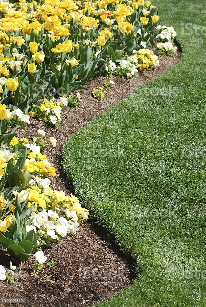 Tulip Landscaping royalty-free stock photo