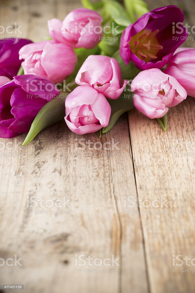 Tulip. stock photo