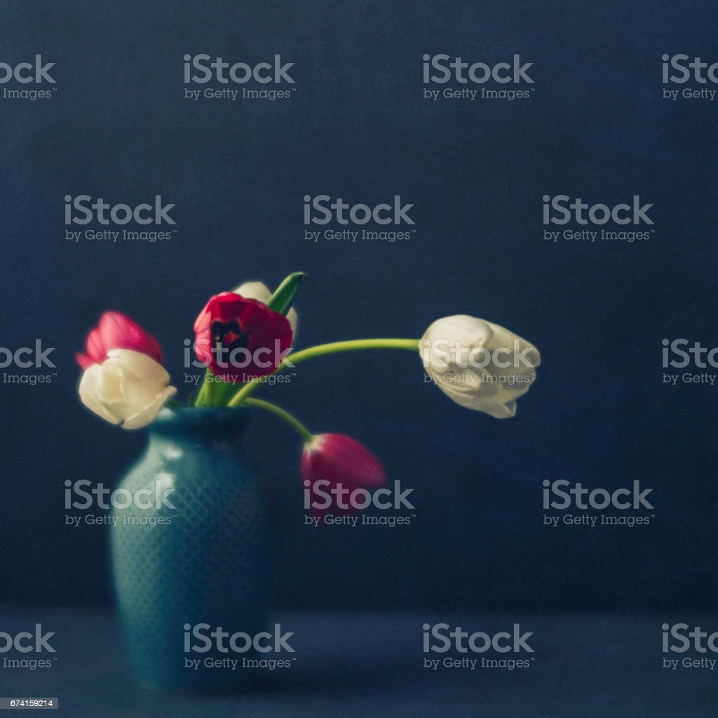Tulip still life for Mother's Day stock photo