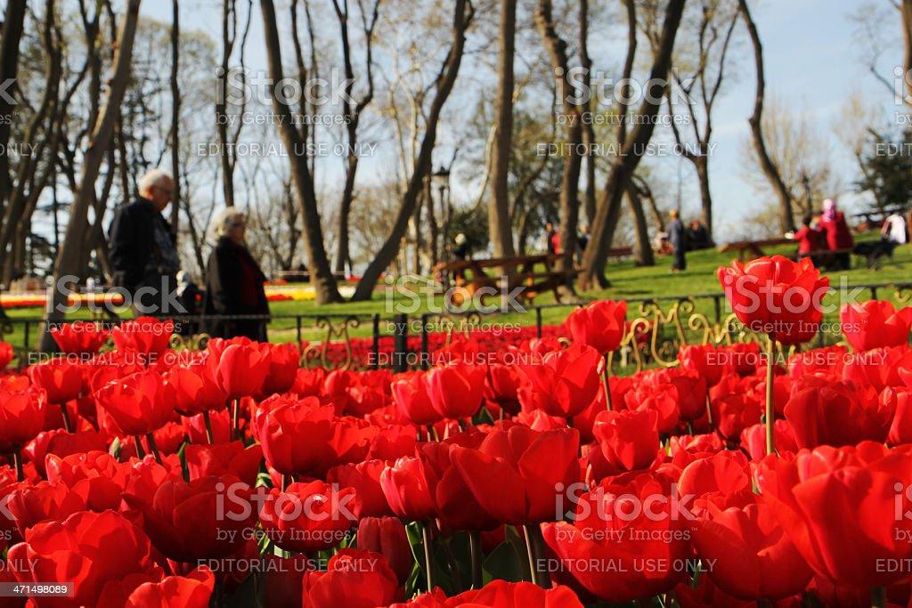 Tulip Time festival in Emirgan,istanbul stock photo