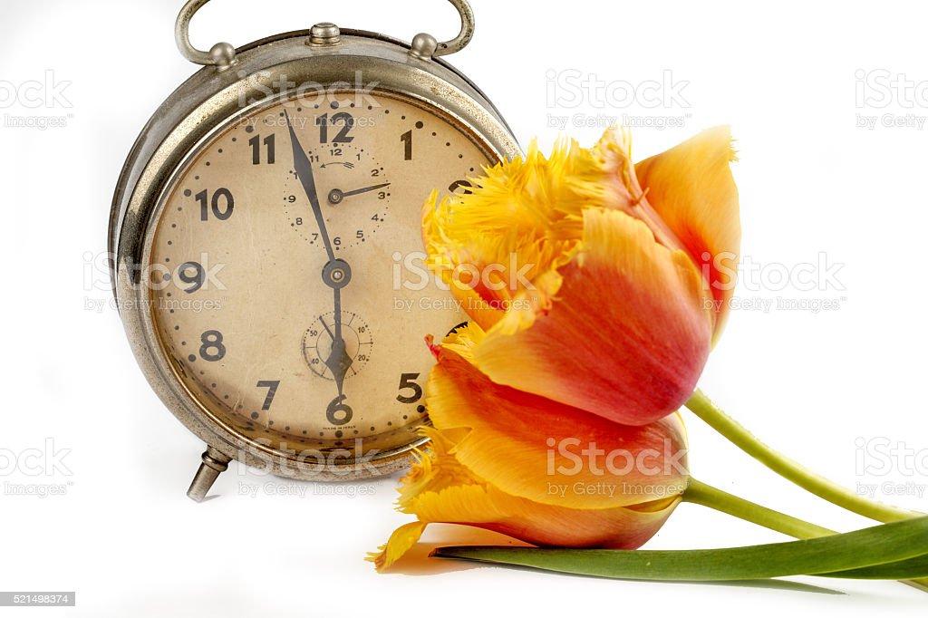 Tulip time stock photo