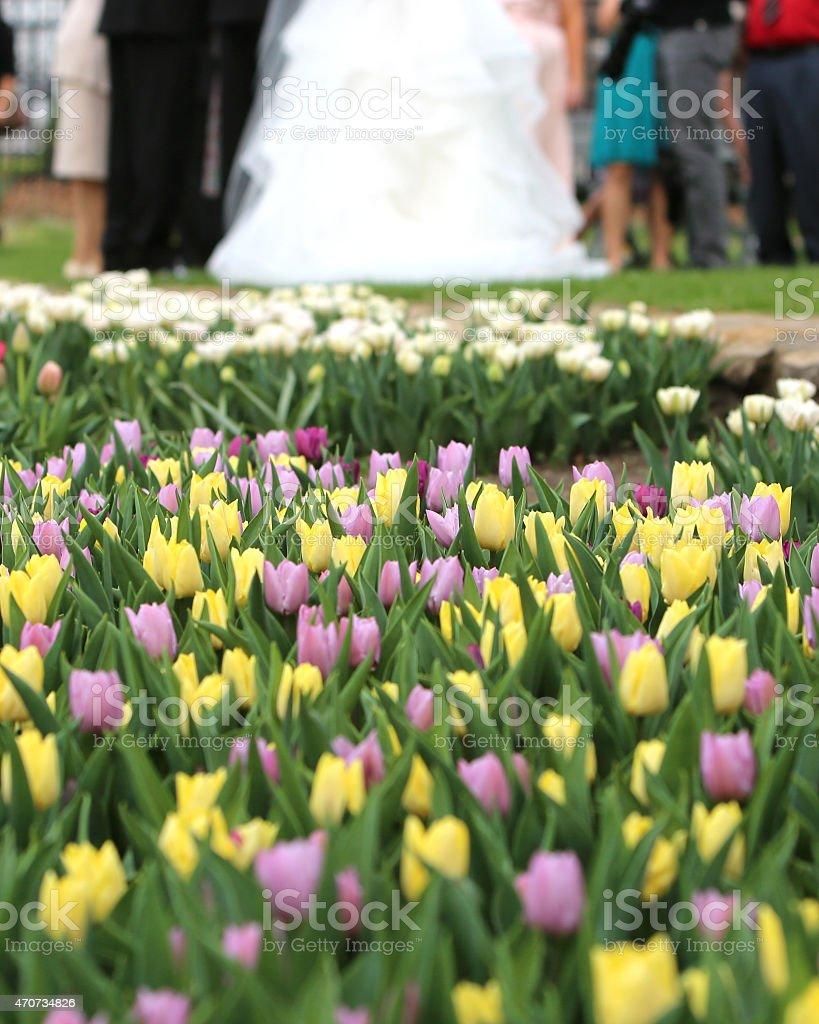 Tulip Wedding stock photo