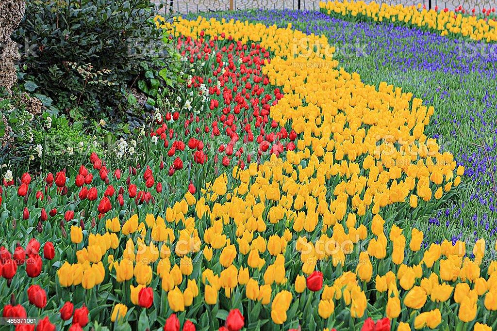 Tulips 34 stock photo