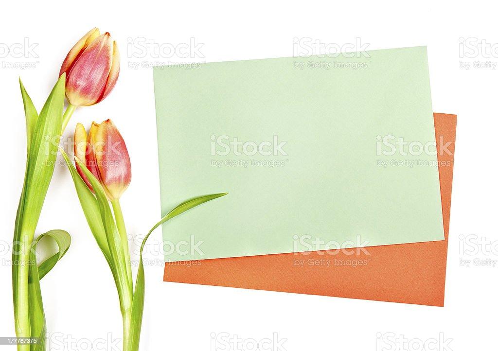 Tulips alongside two envelopes on white background stock photo