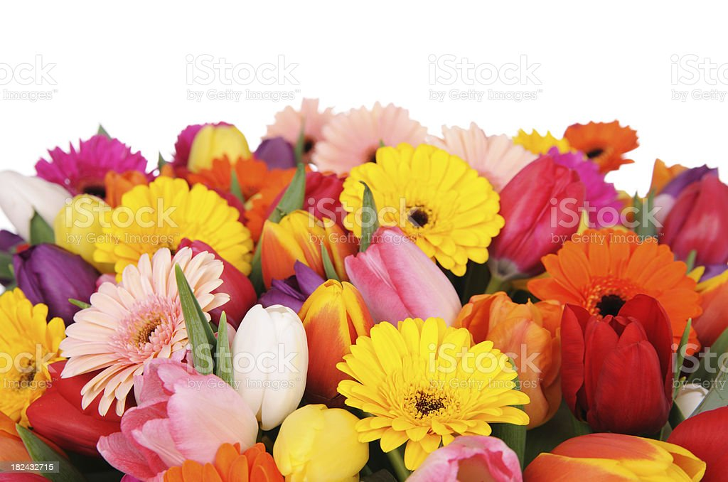 Tulips And Daisies royalty-free stock photo