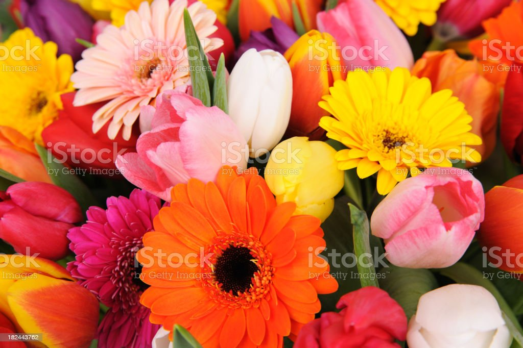 Tulips And Daisies! royalty-free stock photo