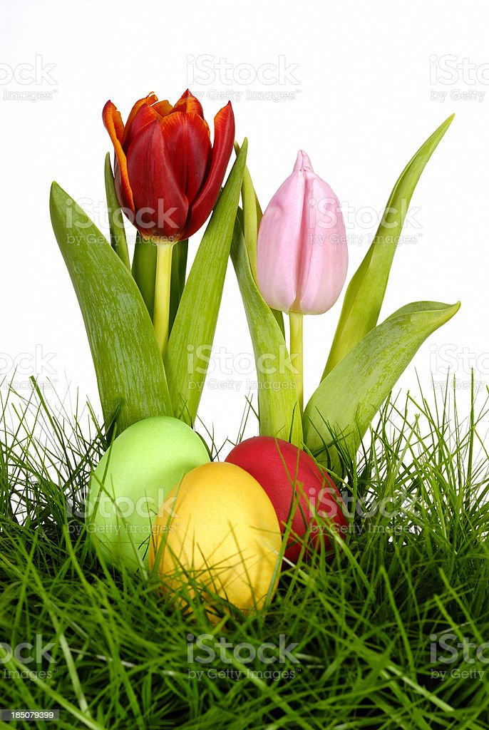 tulips and easter eggs royalty-free stock photo