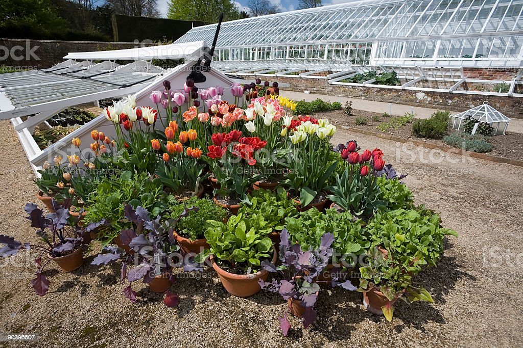 Tulips and Greenhouses royalty-free stock photo