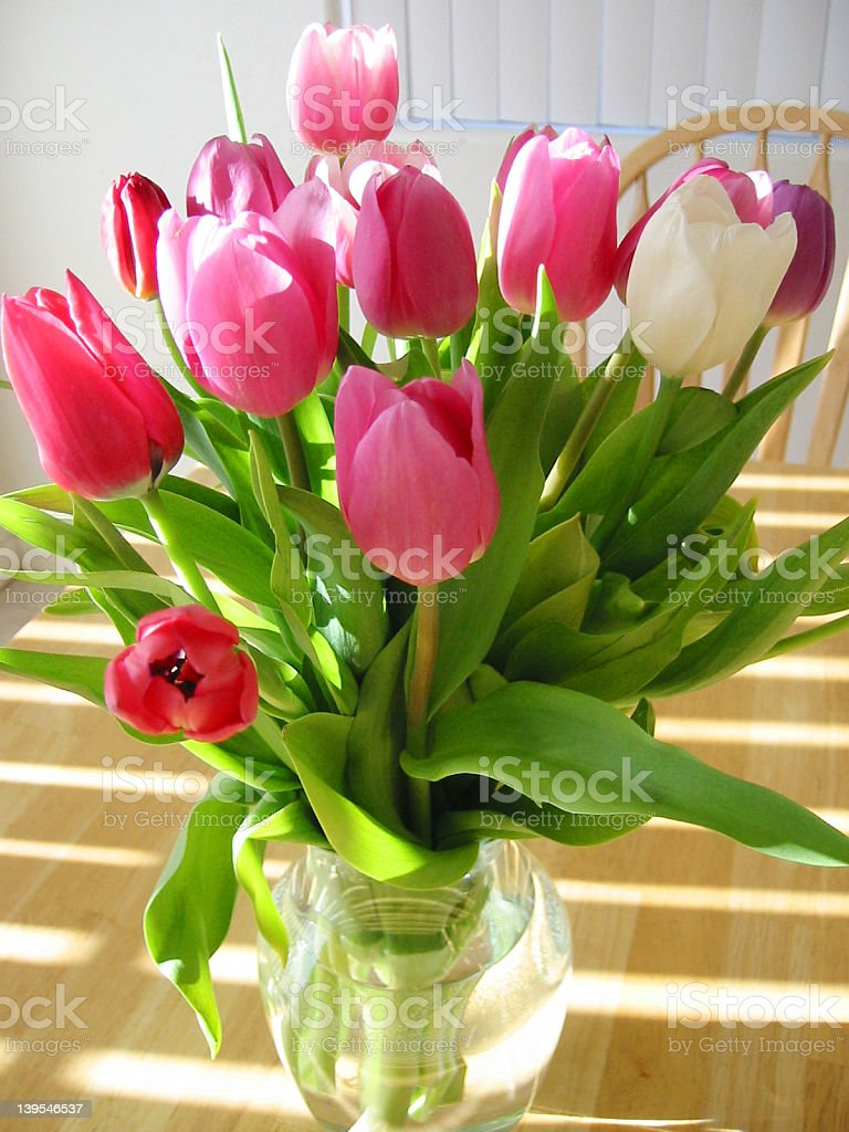 Tulips and Light royalty-free stock photo