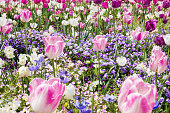 Tulips and other spring flowers