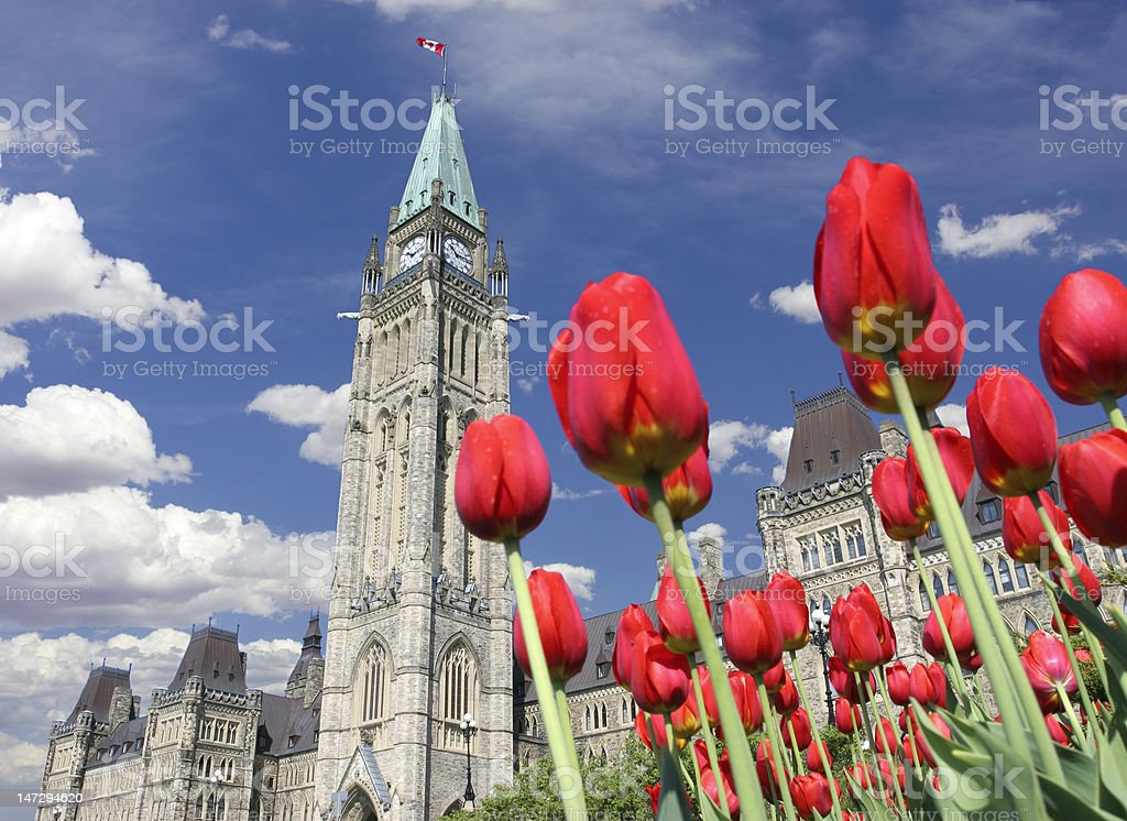 Tulips and Parliament of Canada stock photo
