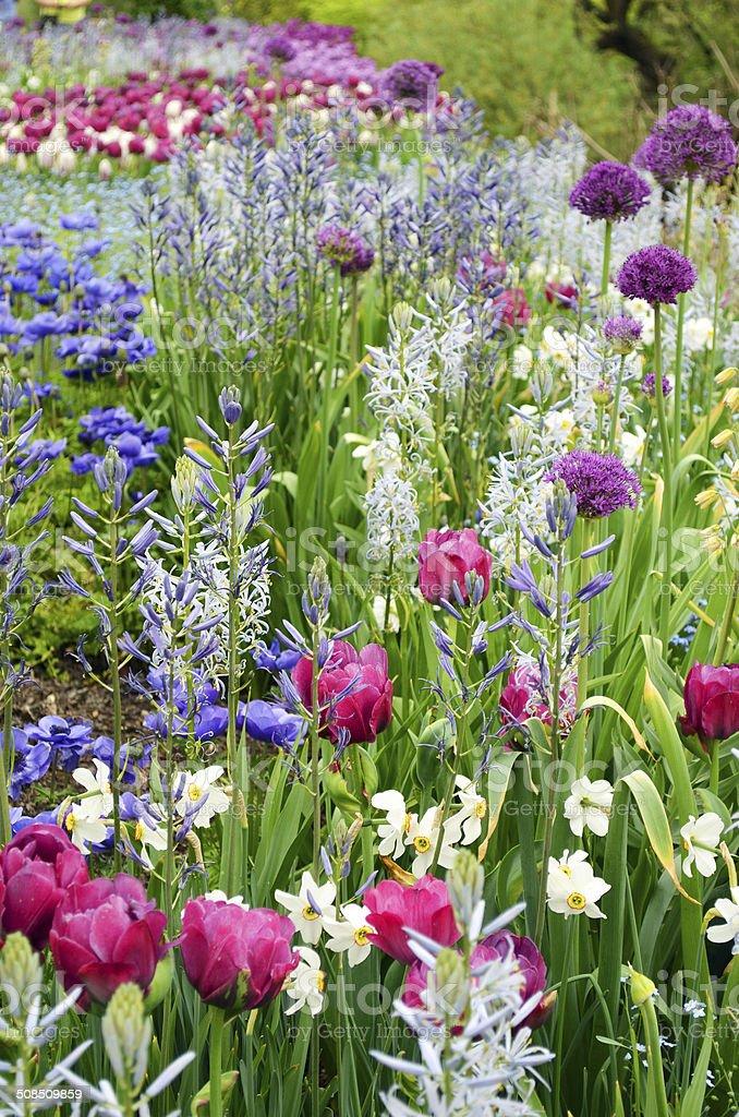 Tulips, Anemone Blue Poppy and Alliums stock photo