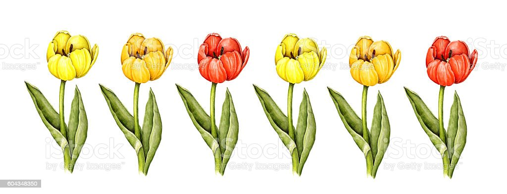 Tulips Border from Watercolor Illustration stock photo