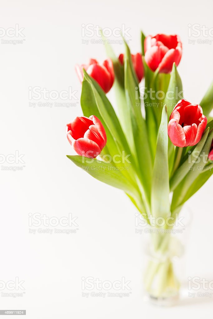 tulips bouquet in glass copy space stock photo