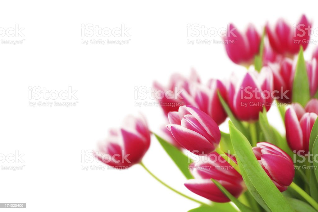 Tulips Bouquet royalty-free stock photo