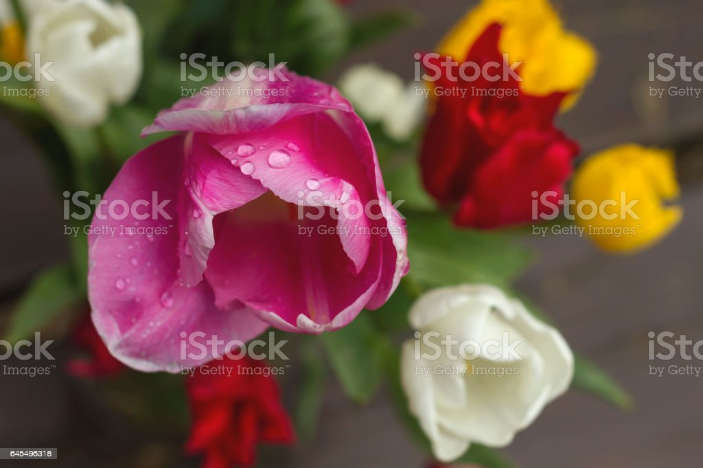 tulips bouquet stock photo