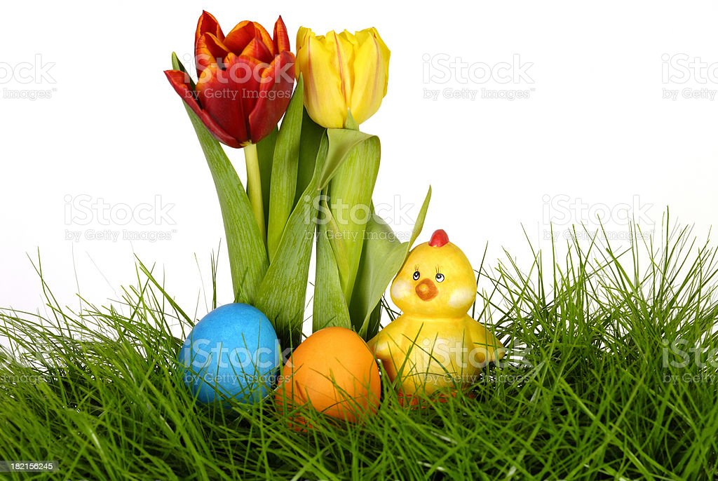 tulips, easter eggs and chicken royalty-free stock photo