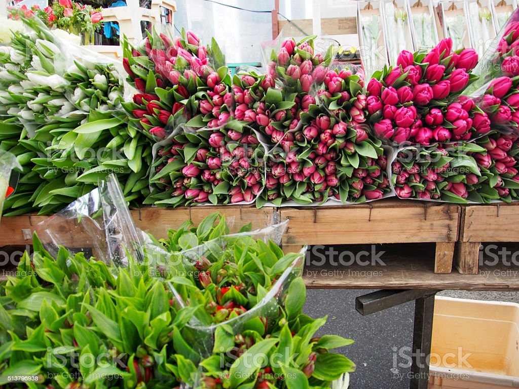 Tulips for Sale stock photo
