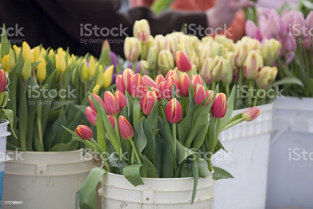 Tulips in a bucket at Farmers Market royalty-free stock photo