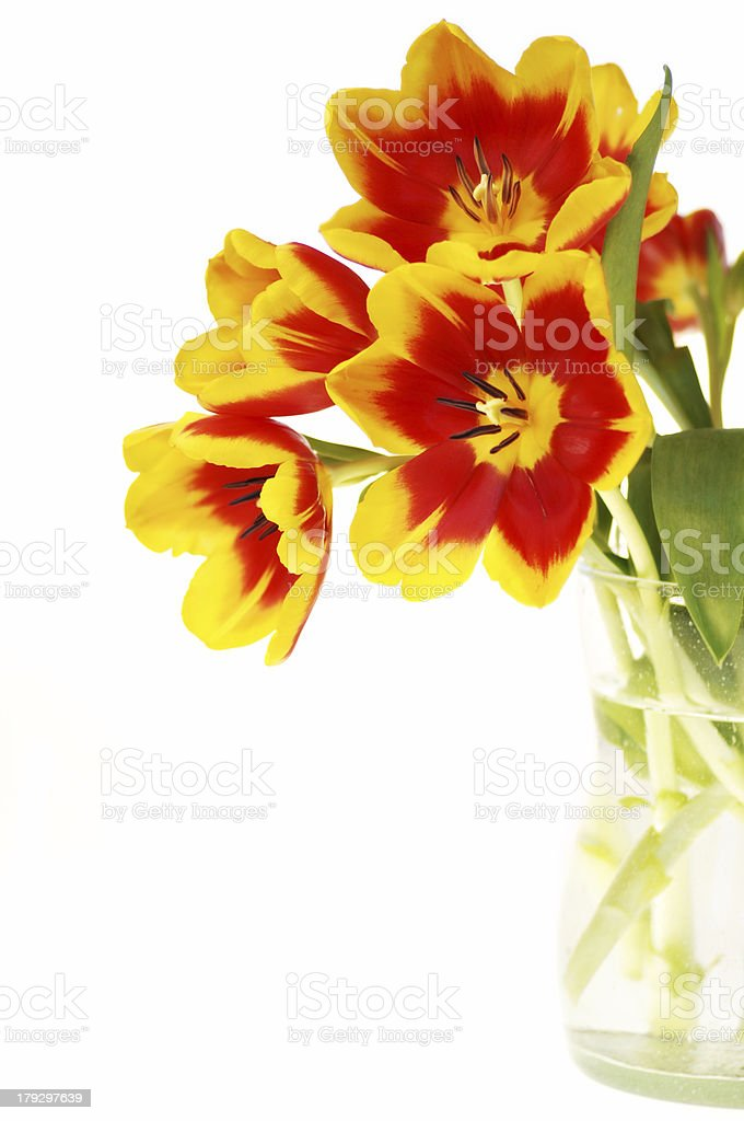 tulips in a vase royalty-free stock photo