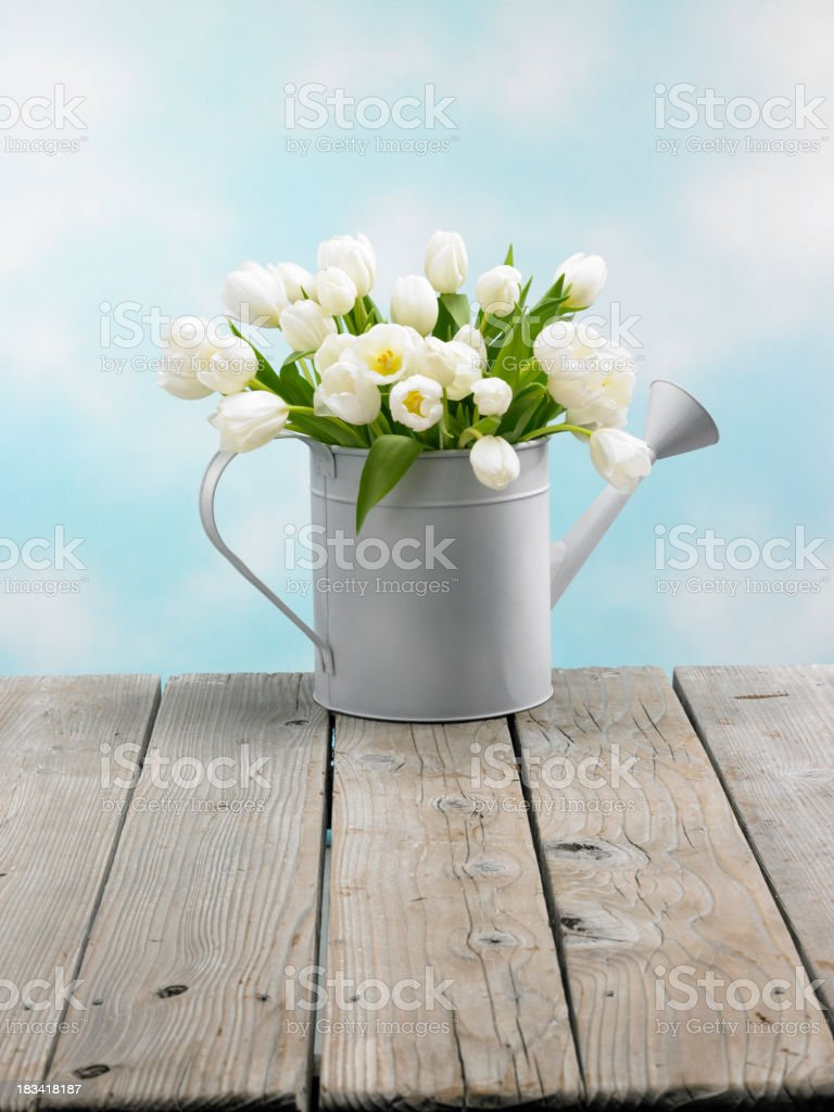 Tulips in a watering can with clouds royalty-free stock photo