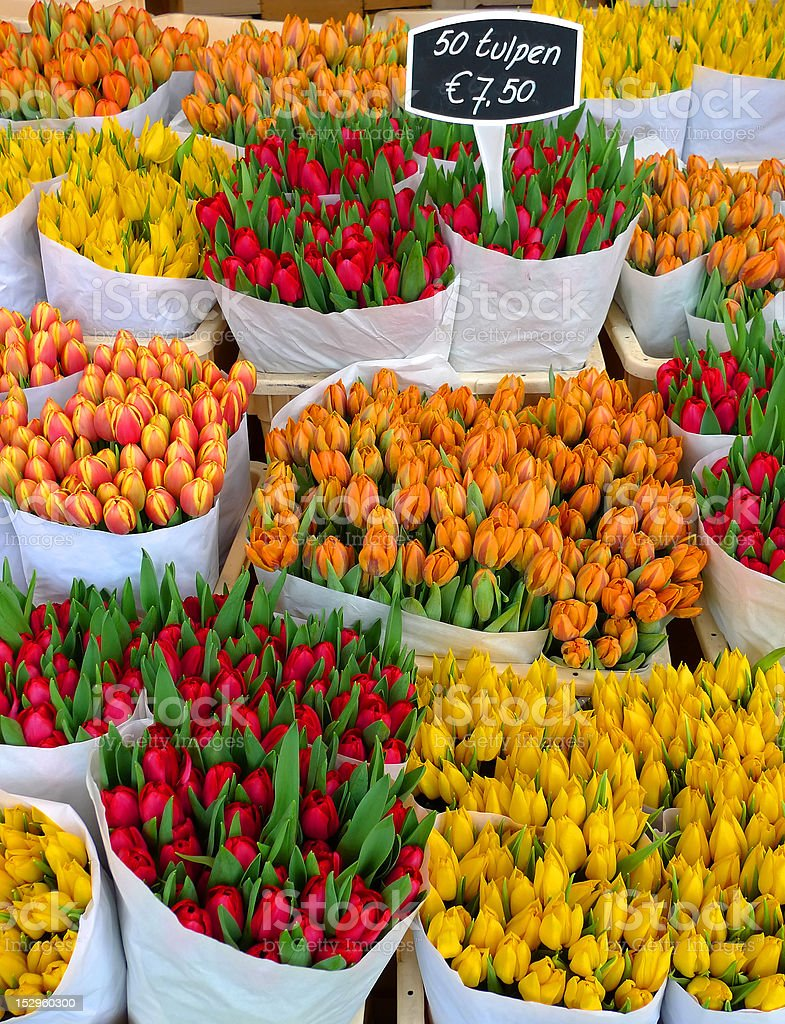 Tulips in Amsterdam stock photo