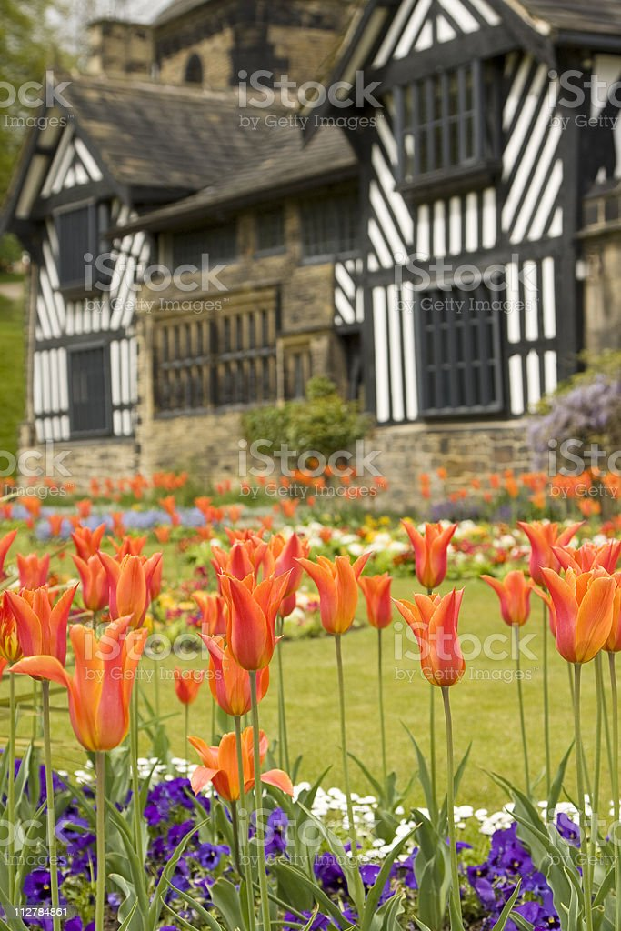 Tulips in an English Country Garden royalty-free stock photo