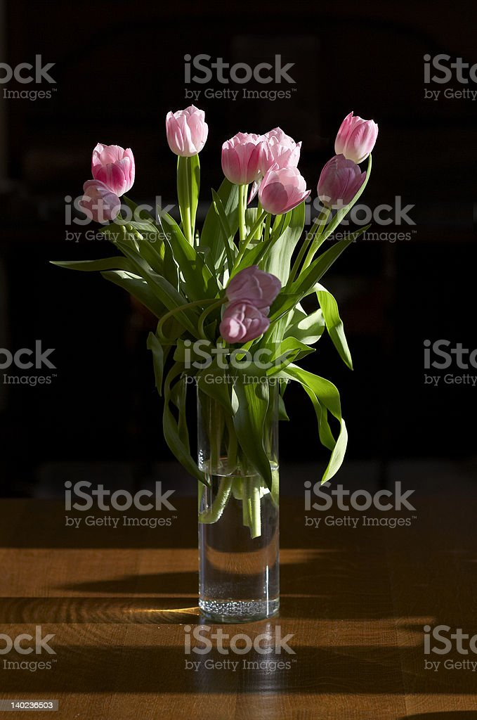 Tulips in my house royalty-free stock photo