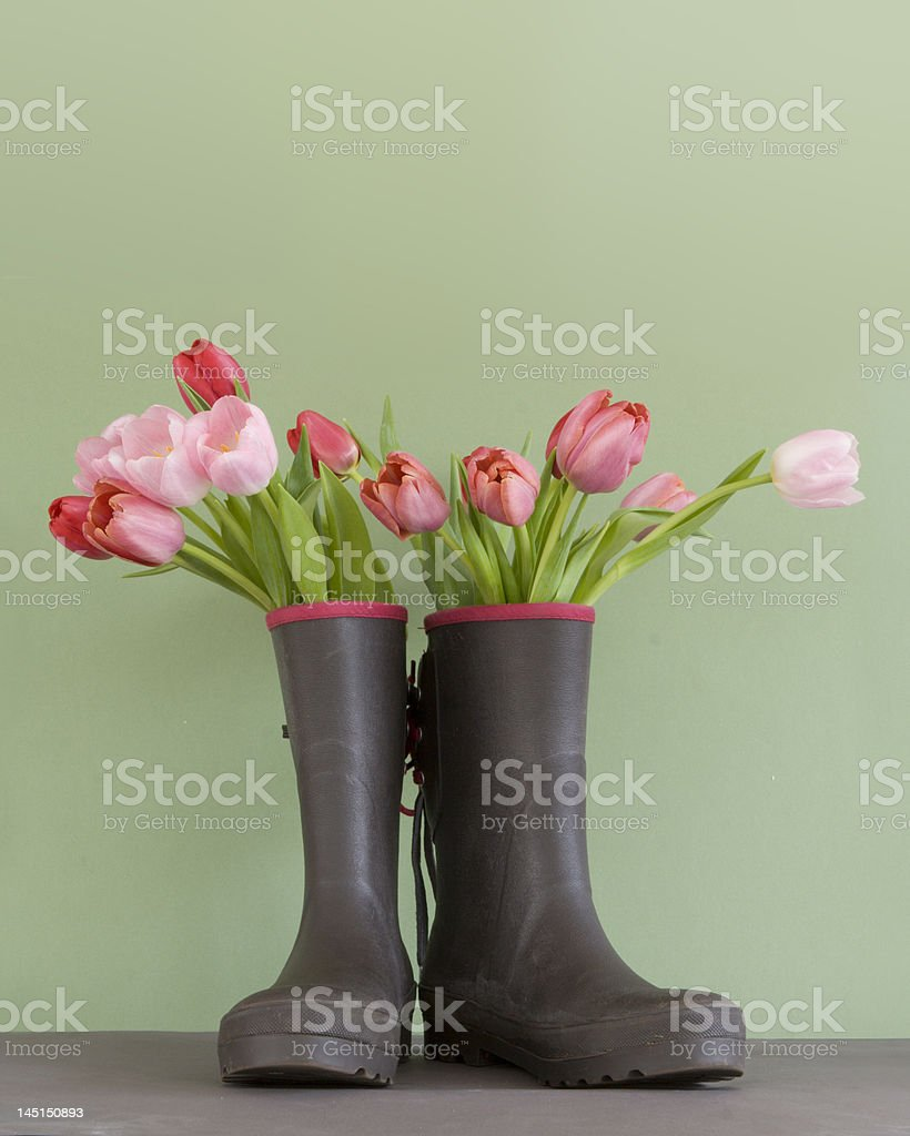 tulips in rubber boots royalty-free stock photo