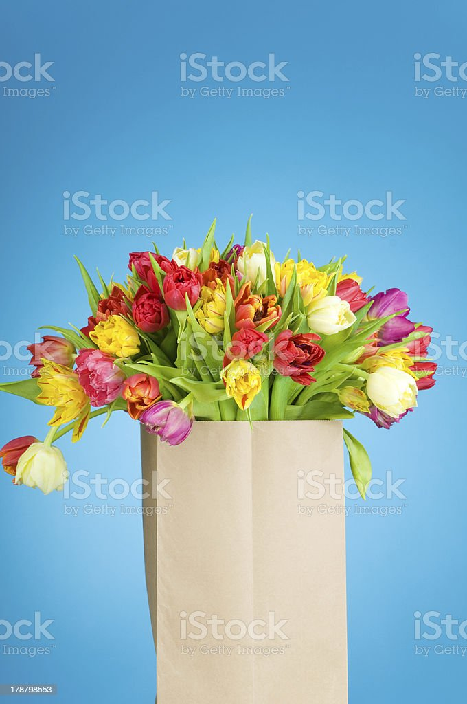 Tulips in the paper bag royalty-free stock photo